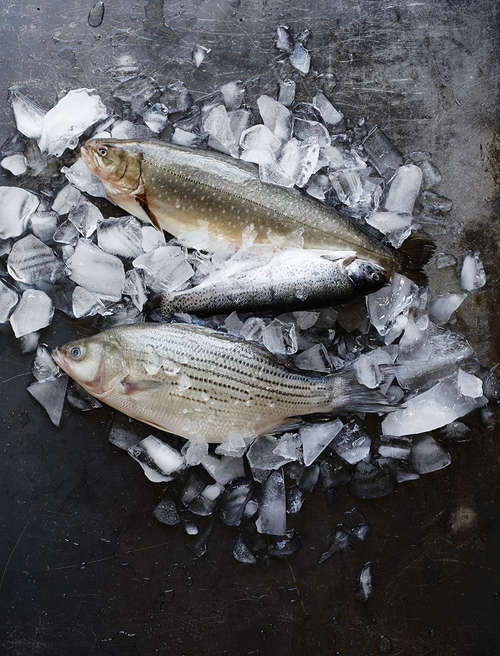 01_FishChoices_023