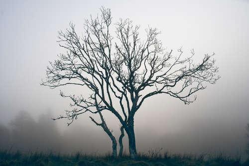 Single-Tree-1-1