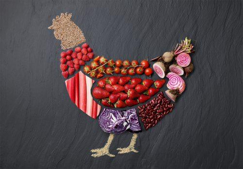 RFee_LandBusiness_Chicken_0074Layered