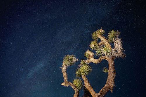 Joshua-Tree-Night01